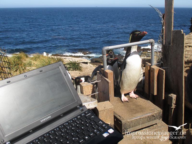 Ein typischer Arbeitstag auf New Island